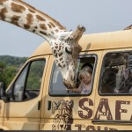 west mids safari park