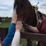 Stroking the horse