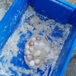 We had great fun making sand dough