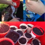 we had fun planting all sorts of seeds including cabbage, lettuce and beetroot