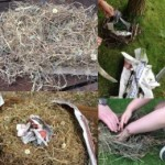 At forest school we built nests for the birds and came up with stories to sell the nests